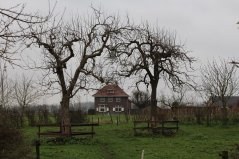 Hoogstam fruitbrigade West-Betuwe (14) - Copy.JPG